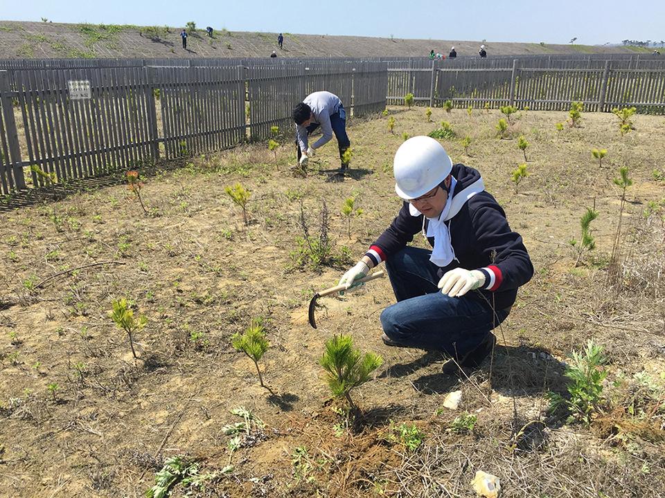東松島セブンの森 海岸防災林再生
