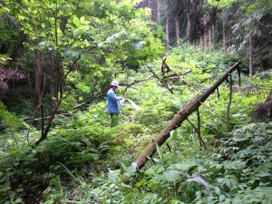 エコラの森荒廃2