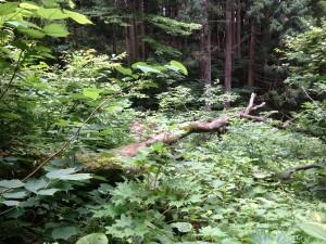 エコラの森荒廃3