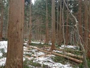 森の作業日2014冬①