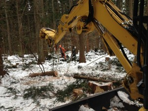 森の作業日2014冬②
