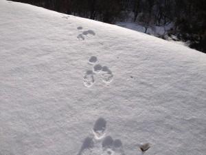 雪の中の足跡②