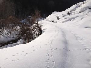 雪の中の足跡③