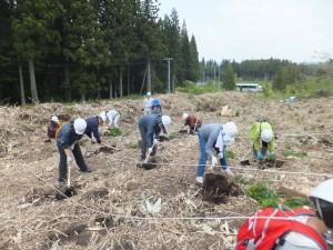 春の植林活動