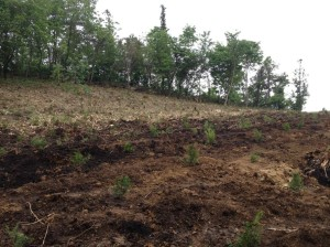 2014春の植林②